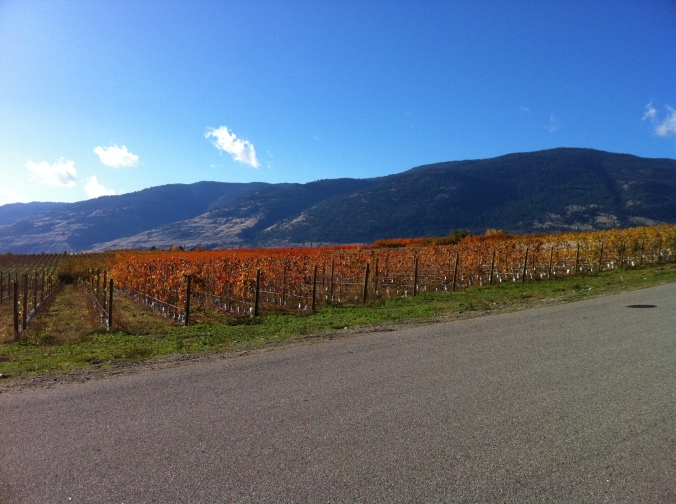 Fall colors in a vineyard near the town of Oliver.