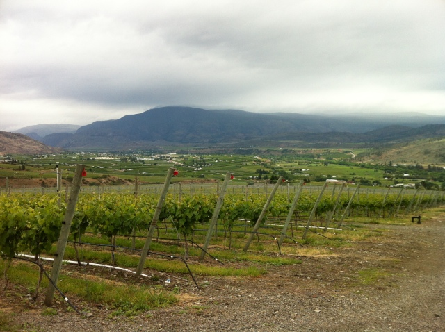 Overlooking the town of Oliver from Hester Creek Estate Winery's vineyards on the Golden Mile bench.